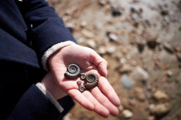 Student holding ammonite fossils