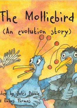 Molliebird