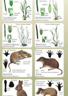 Habitat Guide: Grasslands Cover