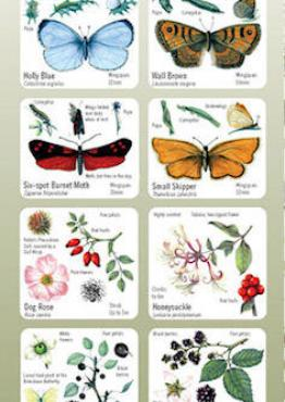 Habitat Guide: Hedgerows Cover