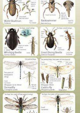 Habitat Guide: Ponds Cover