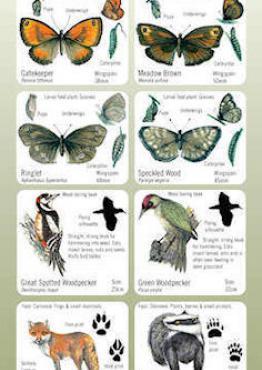 Habitat Guide: Woodlands Cover
