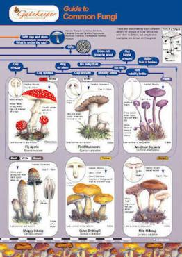 Guide To Identifying Common Fungi Cover