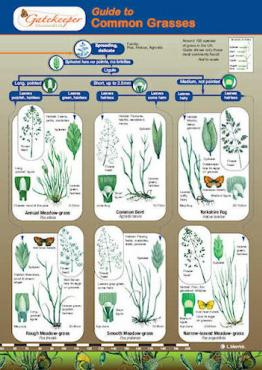 Guide To Identifying Common Grasses Cover