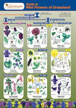 Guide To Identifying Wild Flowers OfGrassland Cover