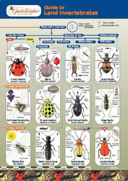 Guide To Identifying Land Invertebrates Cover