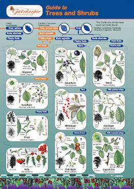 Guide To Identifying Trees and Shrubs Cover