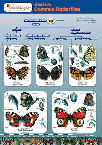 Guide To Identifying Common Butterflies Cover