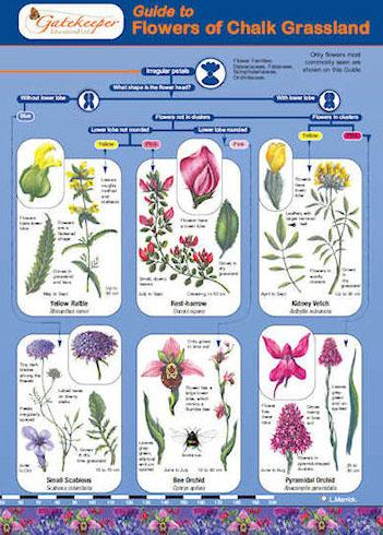 Guide To Identifying Flowers Of Chalk Grassland Cover