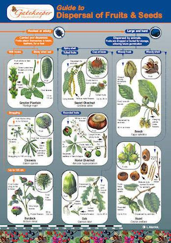 A Guide To The Dispersal Of Fruits And Seeds Cover