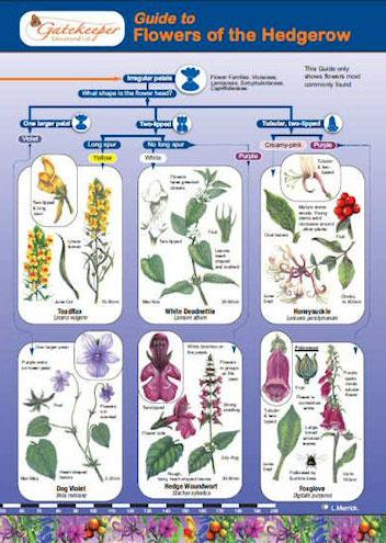 Guide To Identifying Flowers Of The Hedgerow Cover