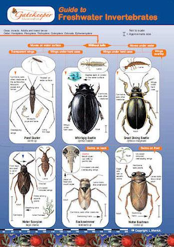 Guide To Identifying Freshwater Invertebrates Cover