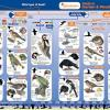 Guide To Identifying Garden and Woodland Birds Back